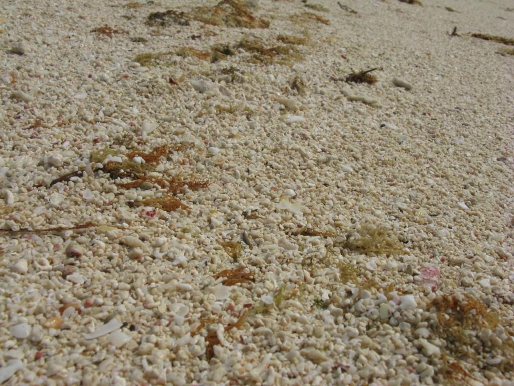 久米島はての浜 5CE6ACE7-DEBB-4B5F-9591-EE7EE2D8231B