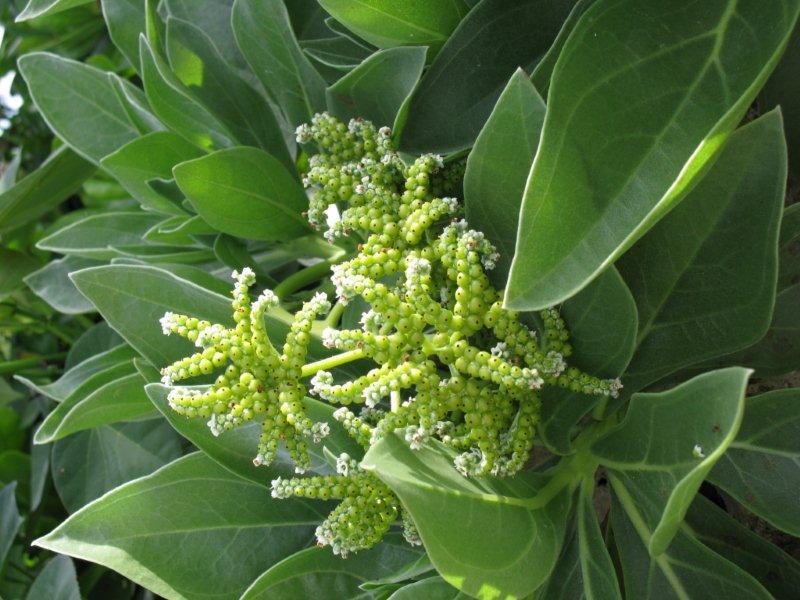 珊瑚に緑インギャーマリンガーデンIMG_0690