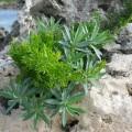 珊瑚に緑IMG_0689