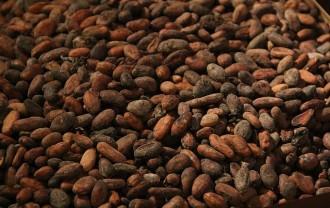 カカオ豆cocoa-1134226_640