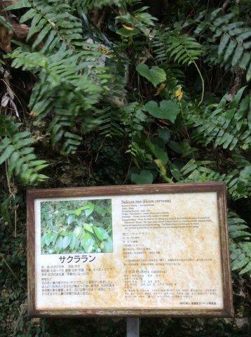 植物パネルIMG_2362