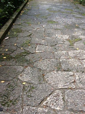 金城石畳道の隆起サンゴの石IMG_2369