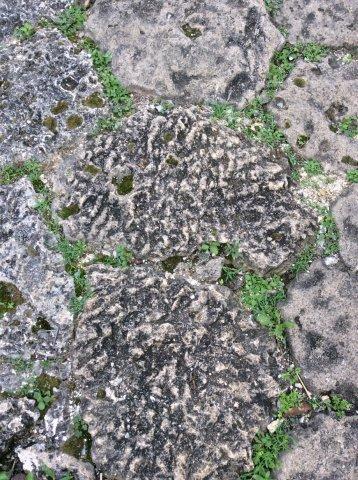 隆起さんごのサンゴの跡IMG_2423