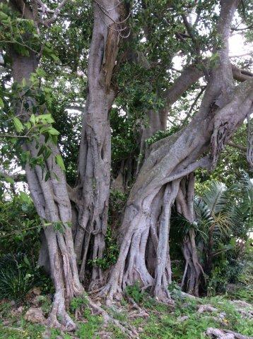 那覇の首里城付近の公園IMG_2456