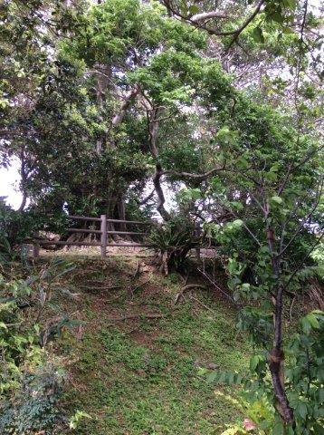 首里城付近の公園IMG_2459