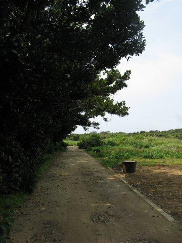 久高島 畑IMG_4752