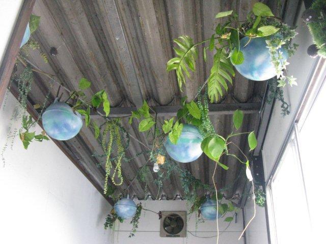 かめかめトイレシャワー洗面室天井IMG_4852