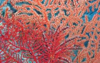 宮古島珊瑚IMG_0566