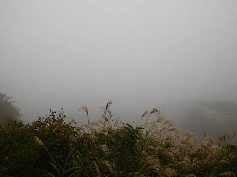 伊豆大島三原山登山口遊歩道