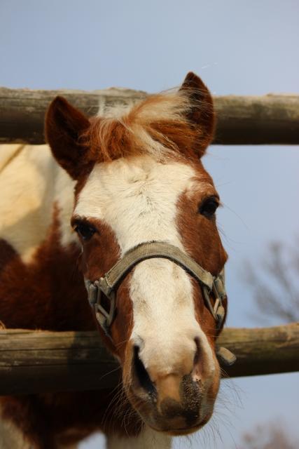 お馬さん顔正面
