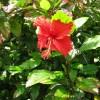 沖縄に咲く魅力的な花々!その名前や種類が知りたい!と思ったら